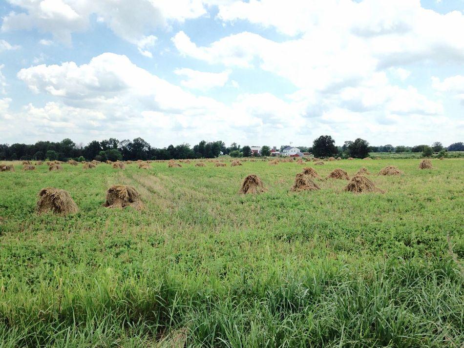 Amish Amish Country Hay Field Field Farming Farm Life Farm