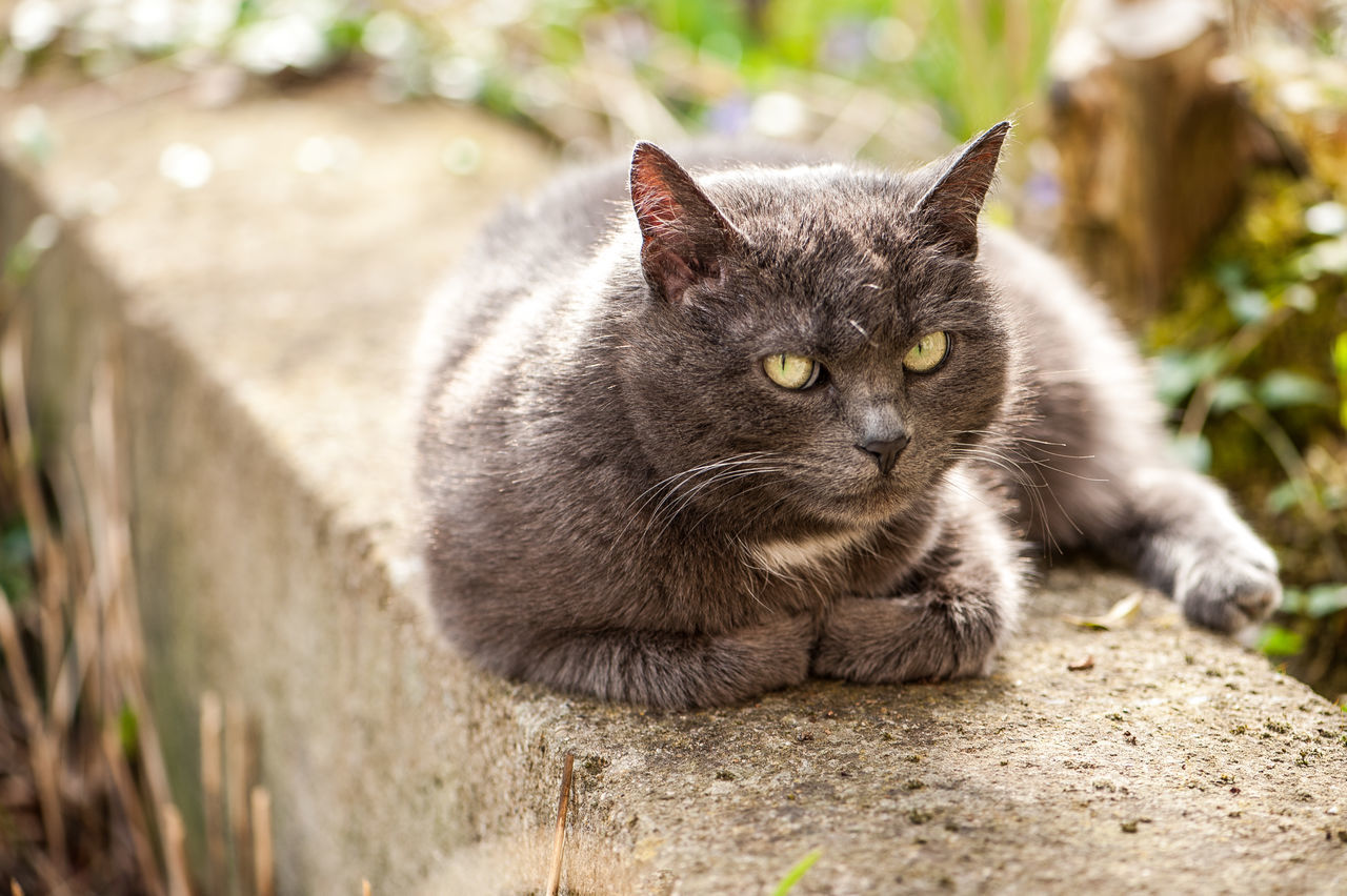 Animal Themes Close-up Day Domestic Animals Domestic Cat Feline Mammal Nature No People One Animal Outdoors Pets Portrait Relaxing Sunbathing
