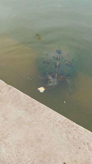 Tortoise...😃