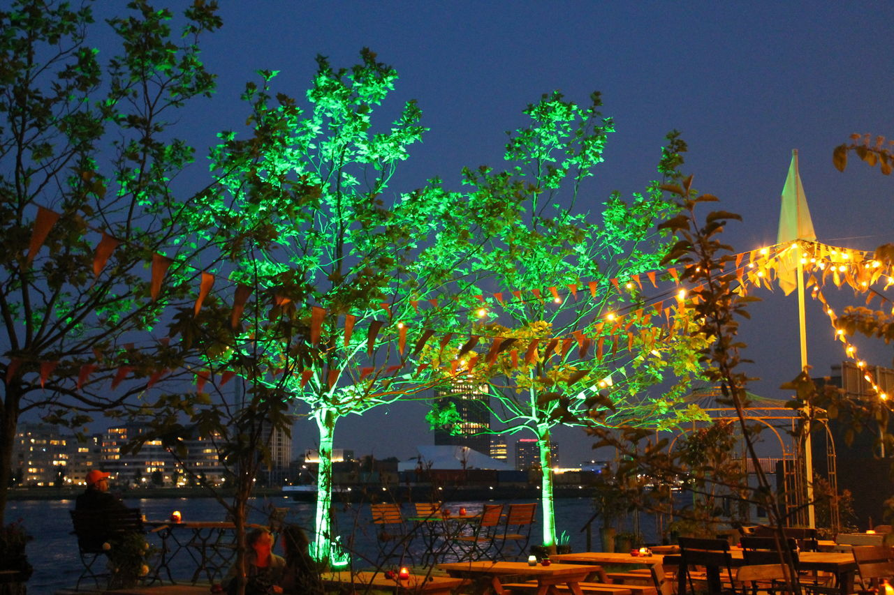 night, illuminated, tree, outdoors, building exterior, growth, built structure, no people, architecture, sky, nature, city