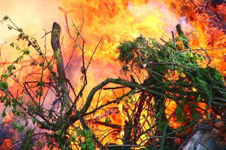 Feuer Fire Forest Fire Waldbrand