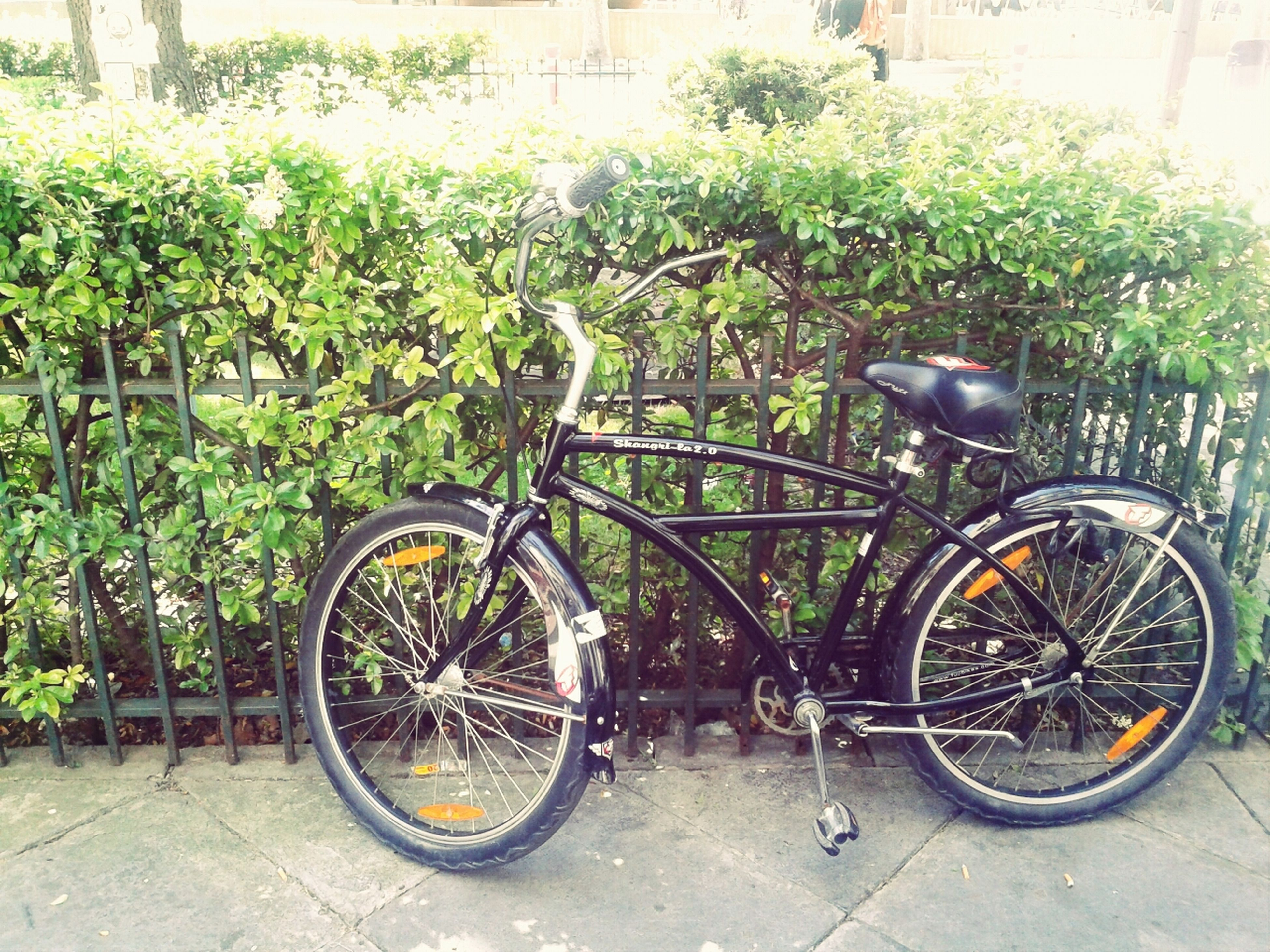 bicycle, transportation, mode of transport, land vehicle, stationary, parking, parked, wheel, leaning, cycle, day, outdoors, no people, plant, bicycle basket, travel, street, sidewalk, tire, sunlight