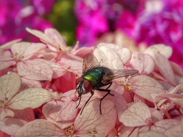 Nature Close-up Macro_collection Photo♡