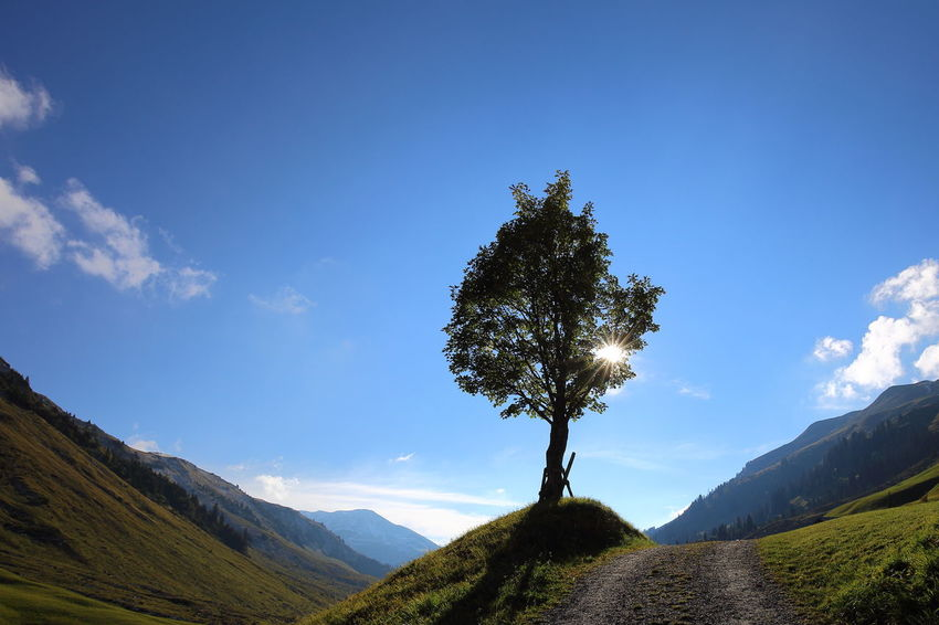 Solitary sycamore. Acer Pseudoplatanus Ahorn Bergahorn Betterlandscapes Blue Eye4photography  EyeEm Best Shots EyeEm Nature Lover Heile Welt Landscape Maple Meditation Minimalism Mountain Mountain Range No People Pristine Prättigau Silhouette Solitary Solitude Sun Switzerland Sycamore Tree