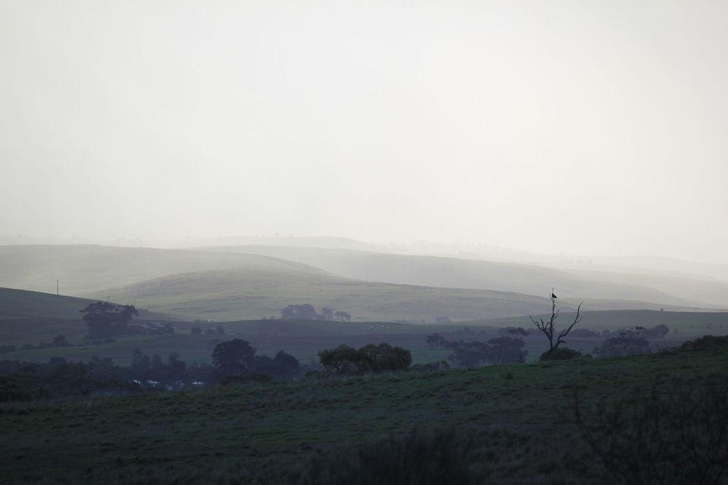 Rain Rainy Days☔ Rainy Landscape Landscape #Nature #photography Adelaide, South Australia Green Hills And Sky