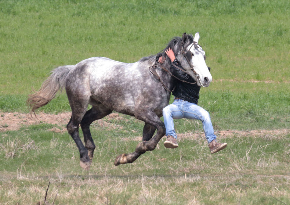 Beautiful stock photos of pferde, Animal Themes, Balance, Casual Clothing, Climbing