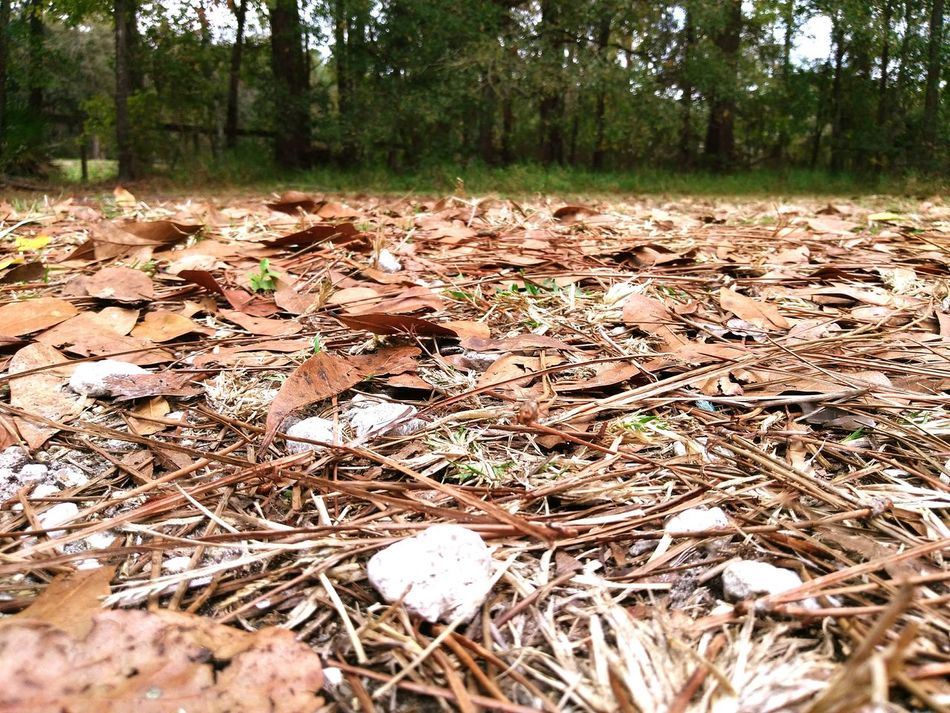 Snow Sports Florida Snow Ground Level View Leaves Leaf Me Alone Outdoors No People Nature 80* Carpet Of Leaves Grab A Rake