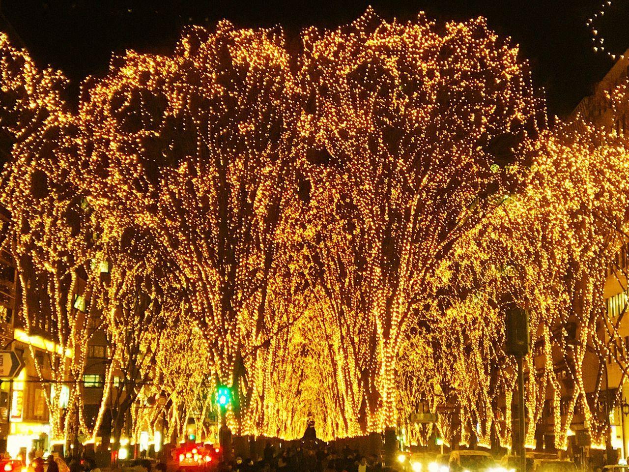 illuminated, night, tree, no people, outdoors, nature, sky, beauty in nature
