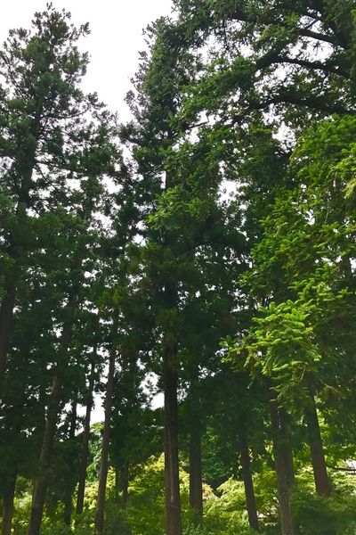 Tree Green Color Growth Nature Outdoors Forest Low Angle View No People Beauty In Nature Breathing Space