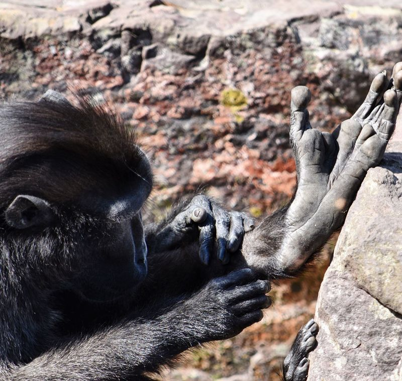 Wildlife Animal Photography Monkey Inspection Keep Clean Hygiene Hands And Feet Close-up Natural Habitat Outdoor Photography Exploring
