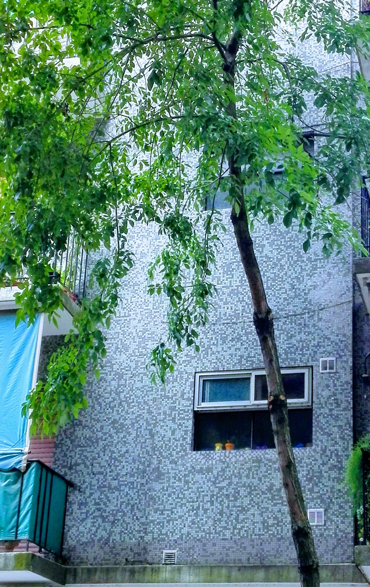 Urban Exploration Cityexplorer City Tree Building Exterior Built Structure Architecture Growth No People Green Color Outdoors Day Branch Ivy Nature Sky