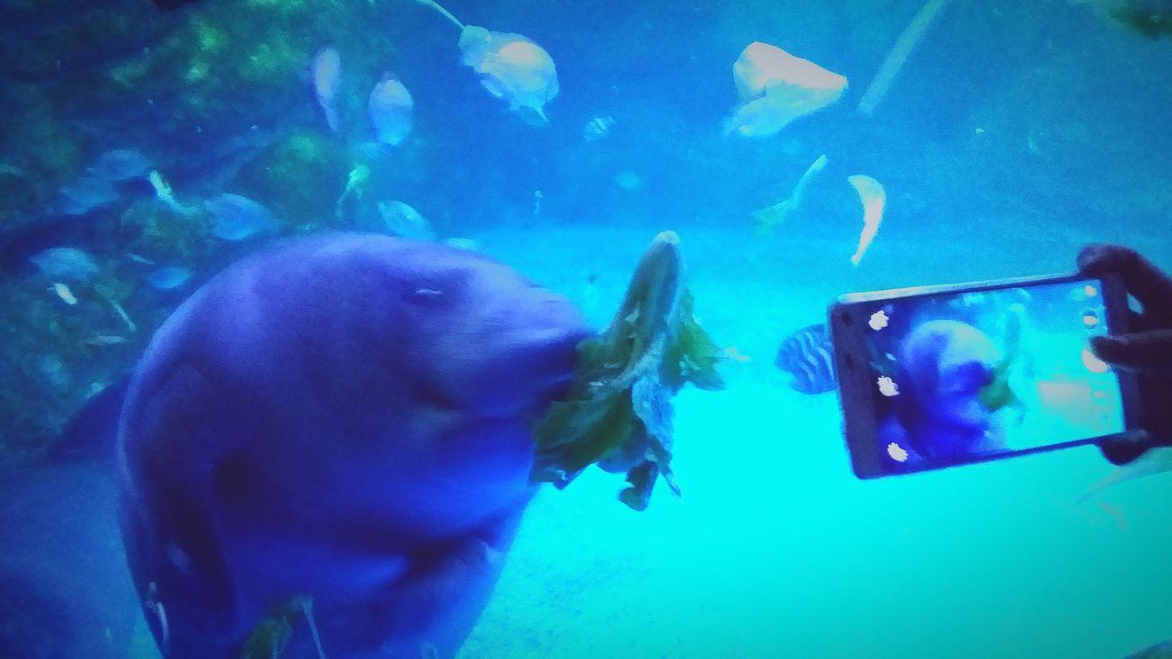 Failure In Focus Aquarium