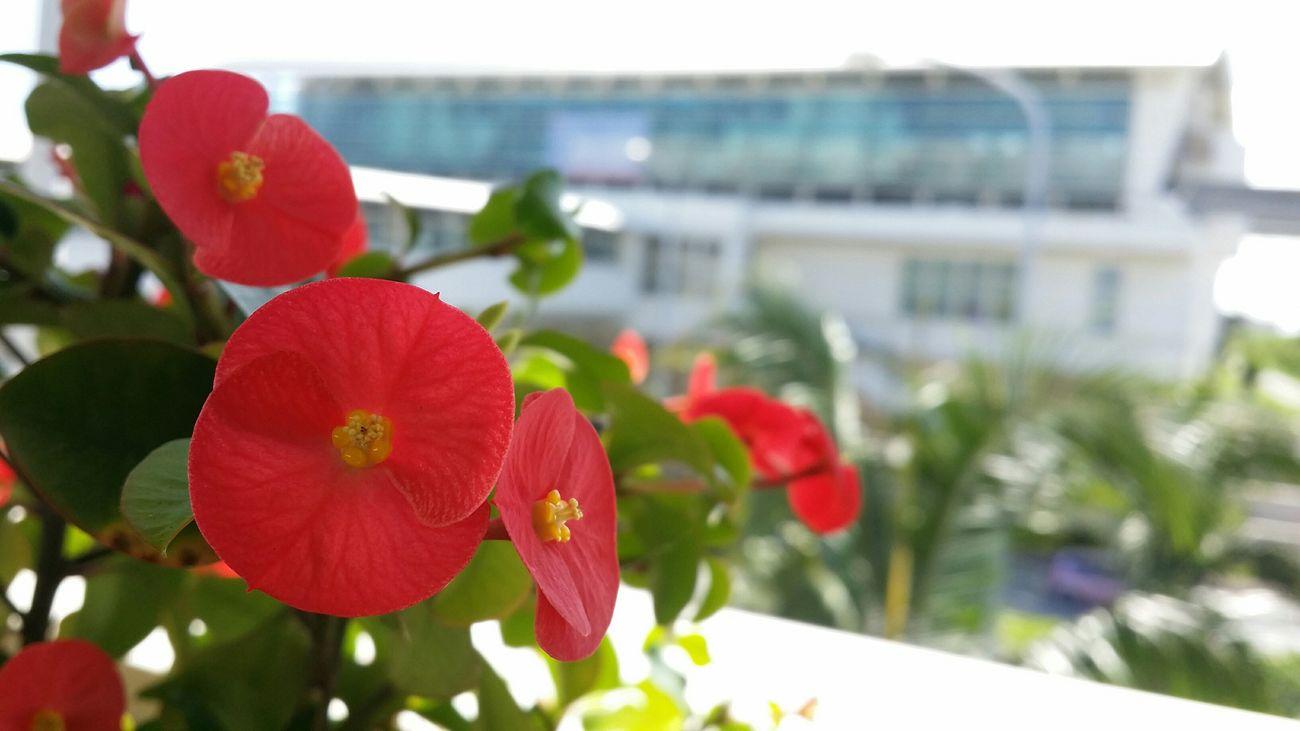 沖縄サイコーでした!またっ Airport Holiday Vacation Time Enjoying Life Okinawa Summer