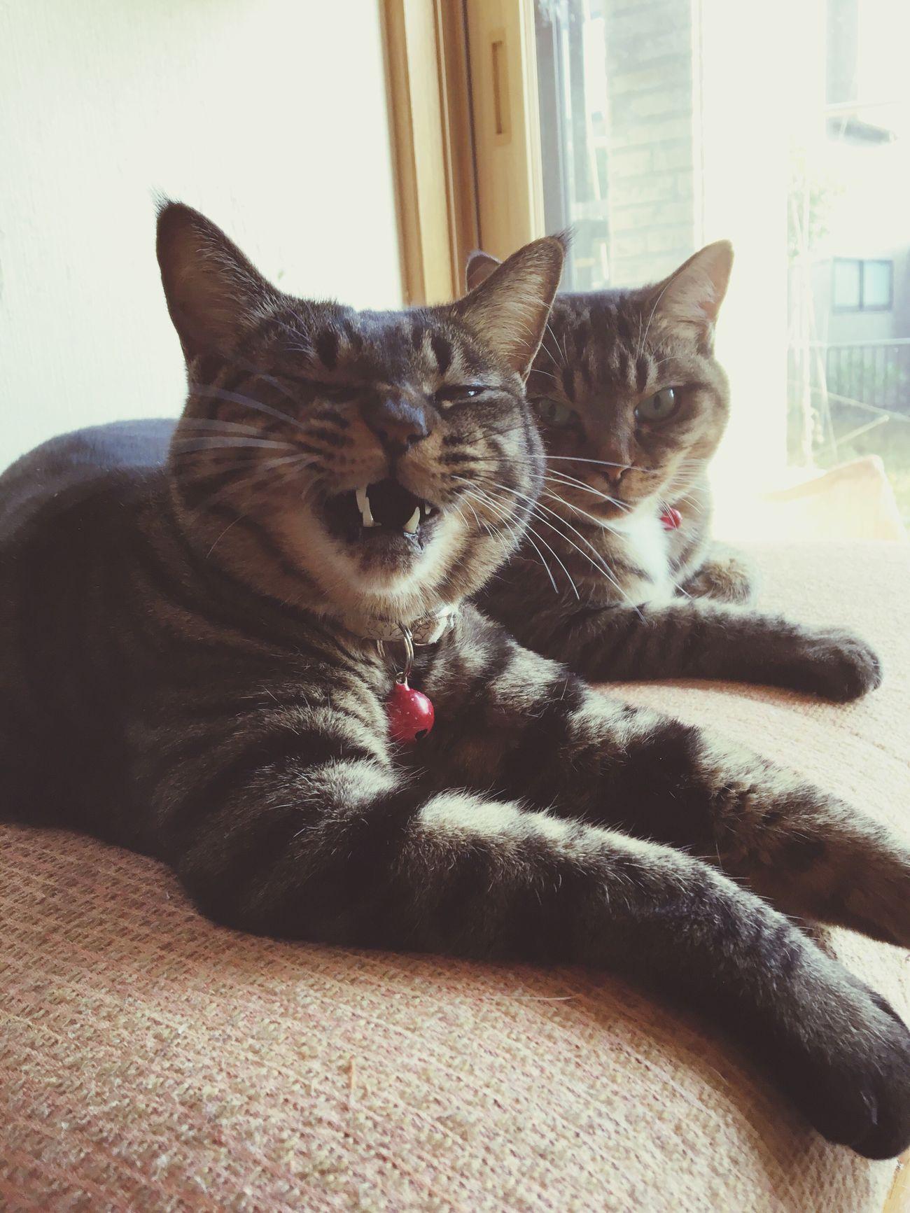 I Love My Cat My Cats Cat♡ Cat Animal Animals Cats Of EyeEm Cats 🐱