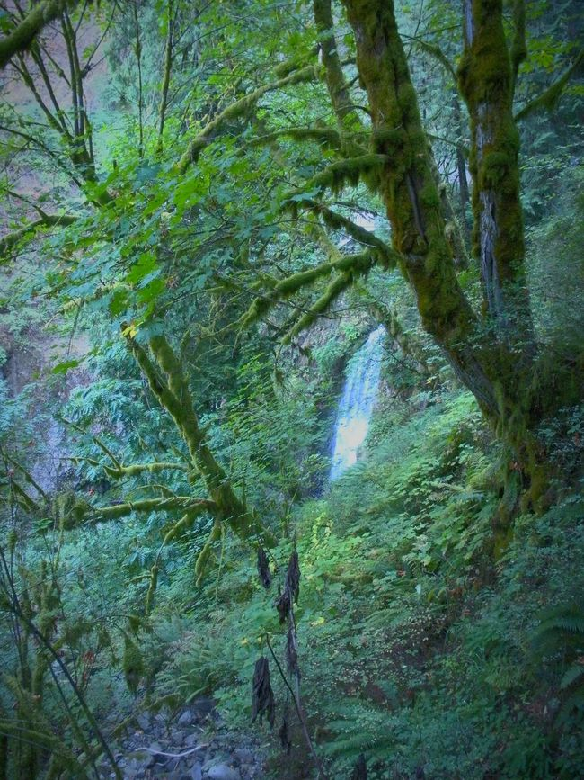 Tree Trunk Tranquility Forest Green Color WoodLand Lush Foliage The Gorge Vacation 2016 Multnomah Falls  Natural Landmark Beauty In Nature Waterfall