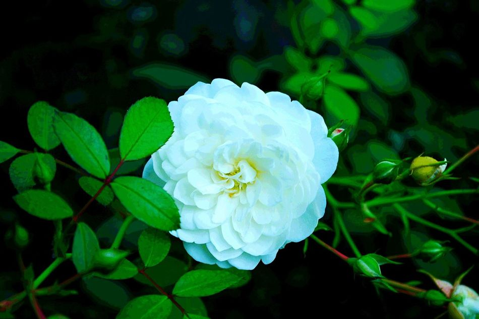 Nature Flower Petal Green Color White Color Beauty In Nature Fragility Lifecolor Focus Object