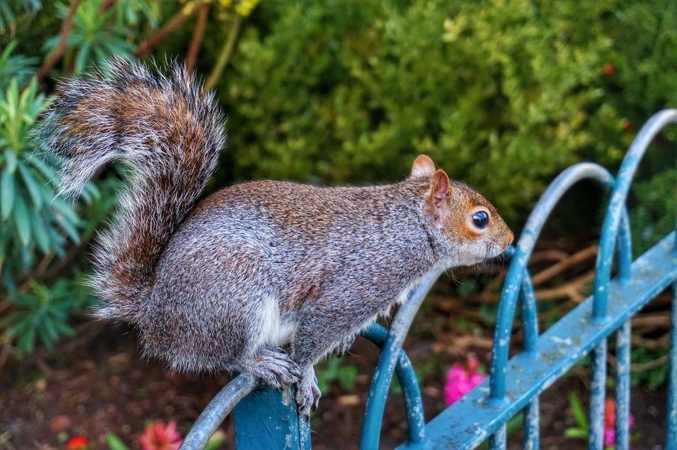 Beautiful stock photos of eichhörnchen, Alertness, Animal Head, Animal Themes, Close-Up
