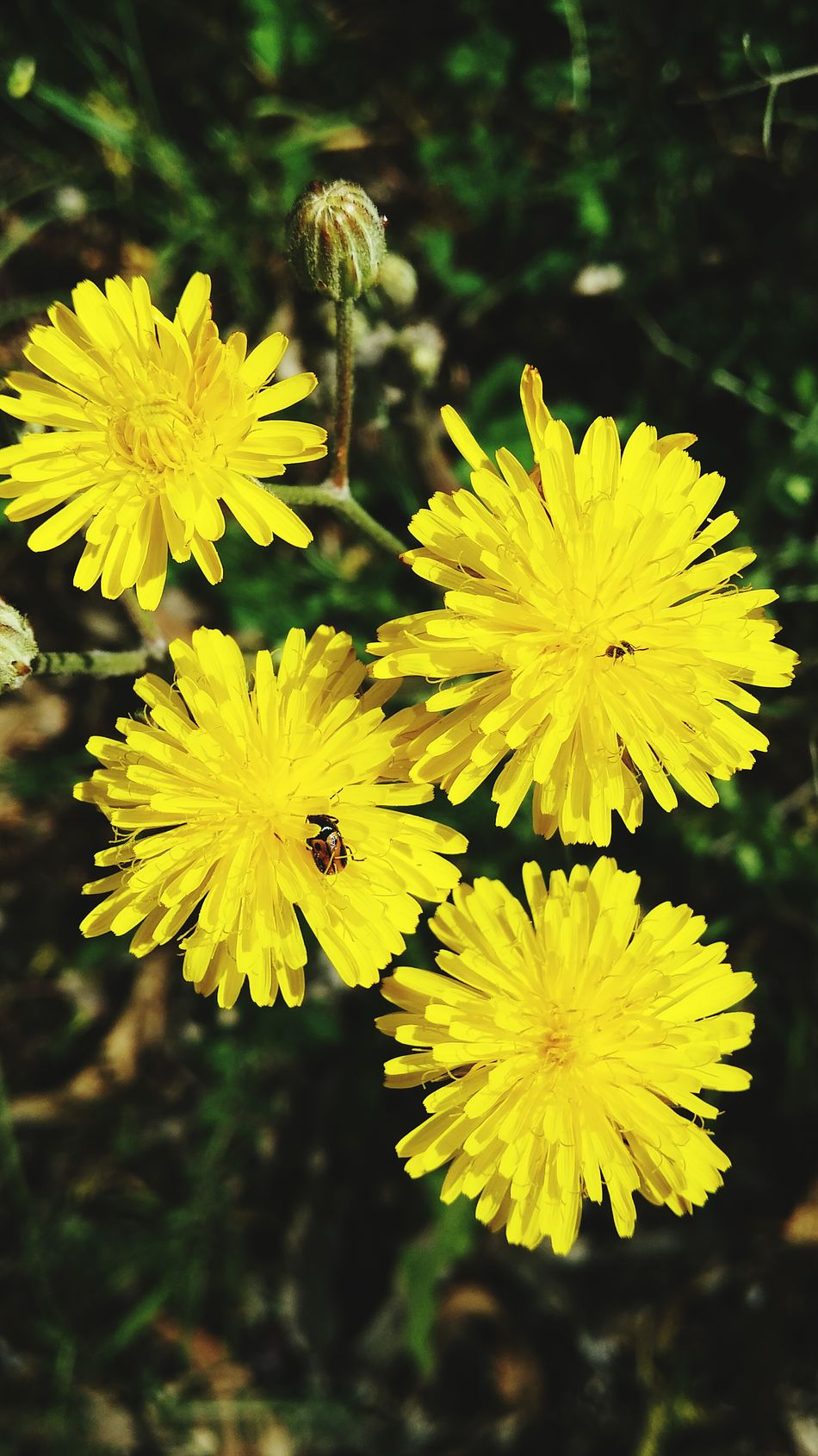 Flower Yellow Fragility Nature Flower Head Beauty In Nature Freshness Growth Petal Plant Outdoors Day Focus On Foreground No People Summer Leaf Close-up Cáceres (Spain) Flores Naturaleza Primavera Beauty In Nature Plant Nature Pollen