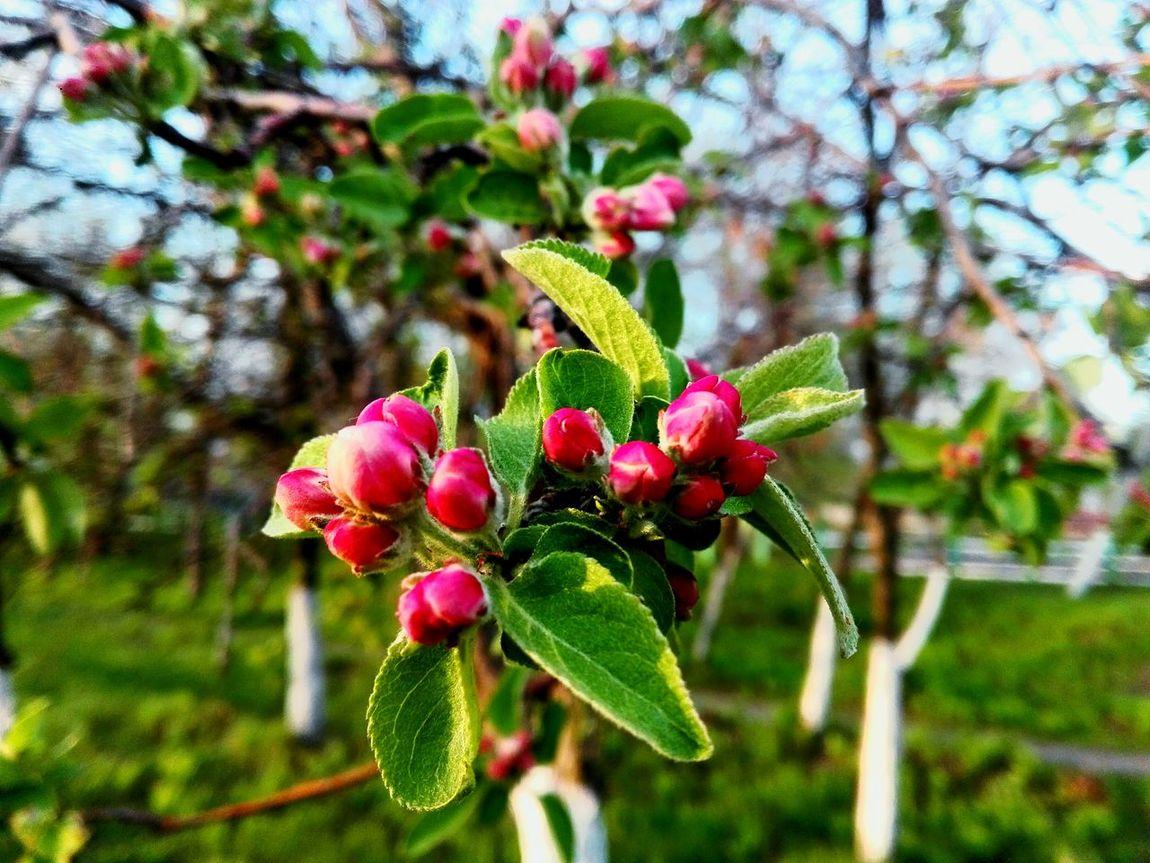 Spring mood🌼 Springtime Spring Springmood Hello World Taking Photos Hi! Sunny Day Sun Beautiful Beauty Relaxing