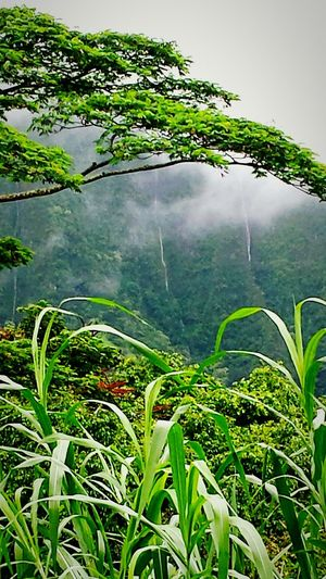 Growth Green Color Plant Beauty In Nature Scenics Grass Nature Tranquility Tranquil Scene Low Angle View Non-urban Scene Green Water Outdoors Day Sky Growing Focus On Foreground Majestic Uncultivated Waterfalls Koolau Mountain Range Kanoehe Oahu Hawsii