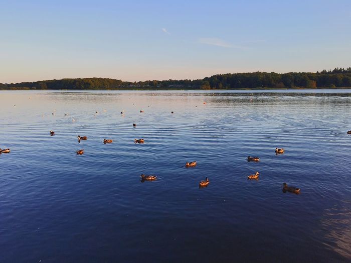 Animals In The Wild Water Tranquil Scene Tranquility Floating On Water Bird Nature Lake Flock Of Birds Fatherhood Moments Scenics Sky First Eyeem Photo