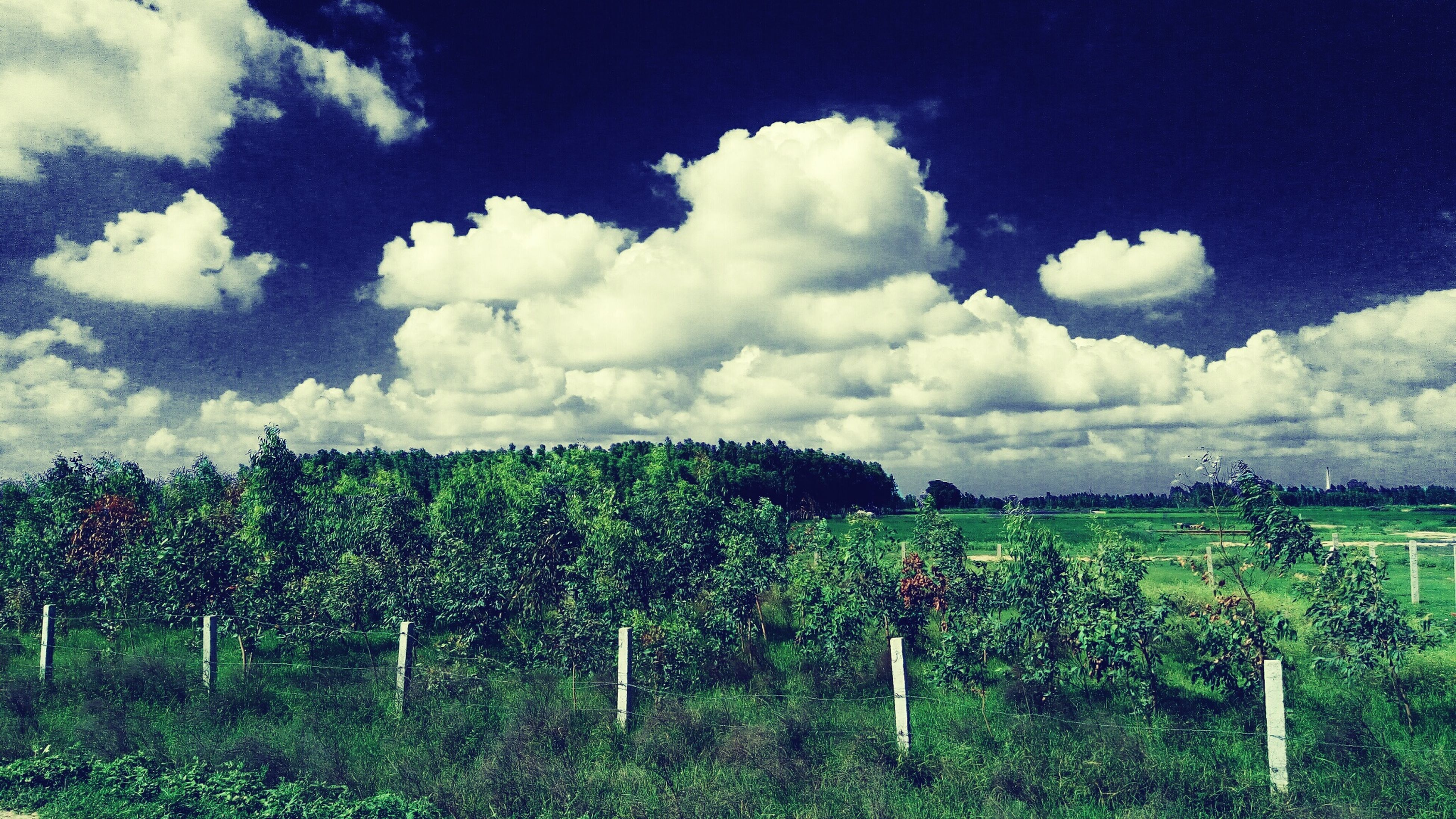 sky, tree, fence, cloud - sky, tranquil scene, tranquility, field, plant, nature, growth, blue, day, cloud, non-urban scene, scenics, rural scene, outdoors, beauty in nature, cloudy, cumulus cloud, agriculture, hedge, green color, no people, remote, cloudscape