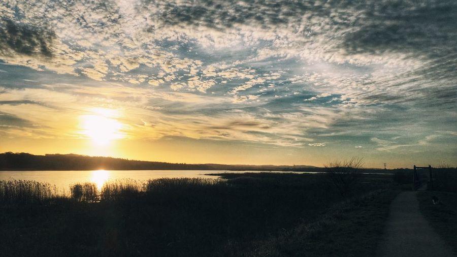 Just before sunset this afternoon, at Aarslev Engsø, near Aarhus, Denmark Sunset Sunsets Lake Aarhus Denmark