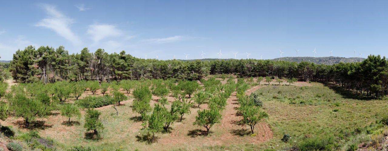 Agriculture Barracas Beauty In Nature Castellón Day Field Grass Growth Landscape Nature No People Outdoors Scenics Sky Tranquil Scene Tranquility Tree