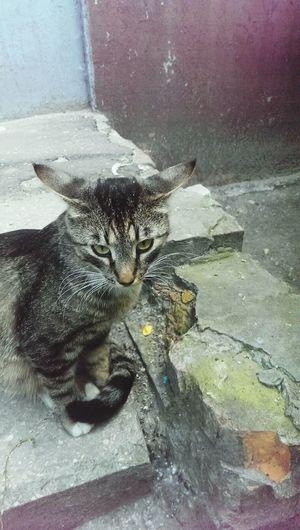 Крылатоухий кот!