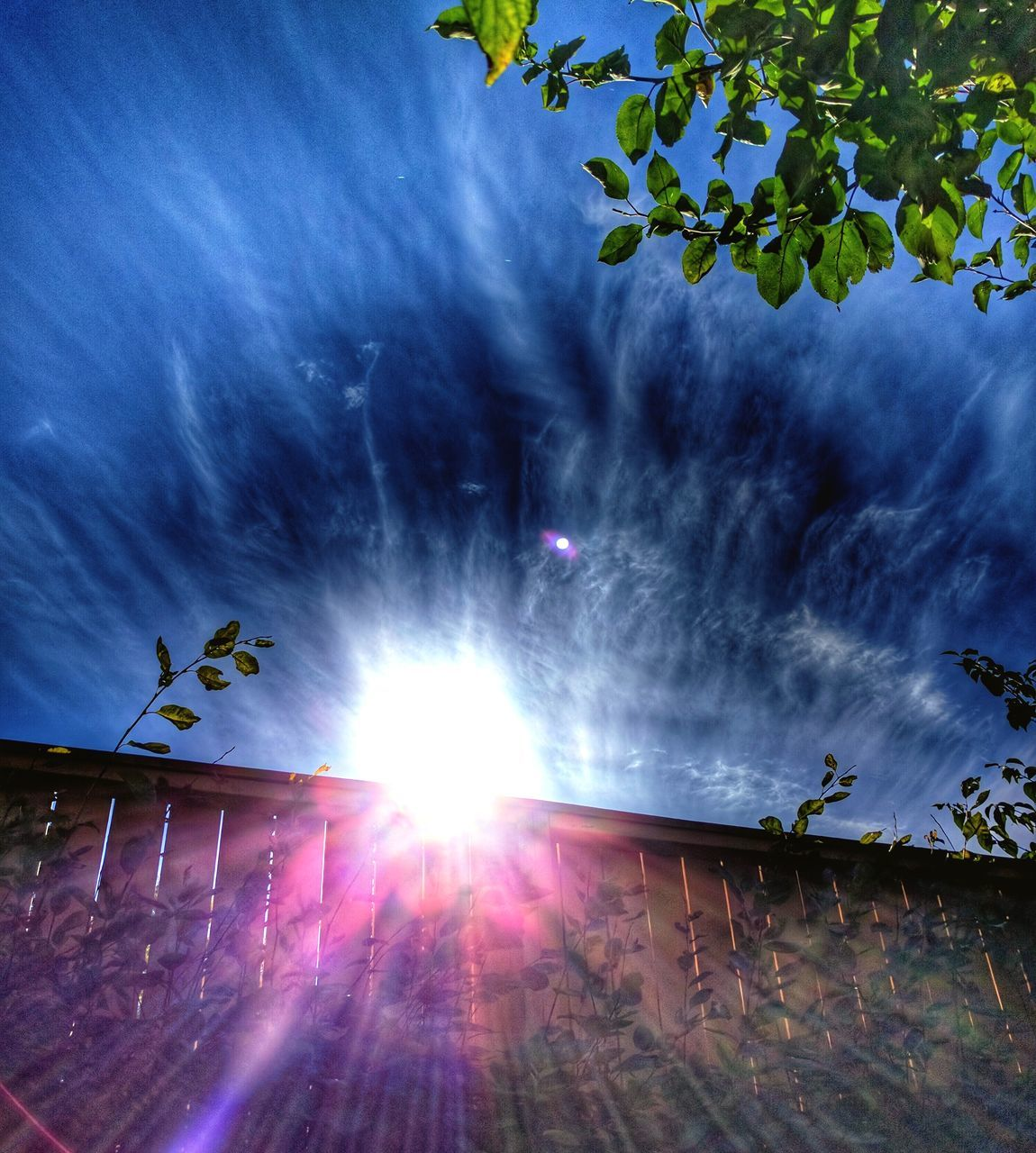 low angle view, sun, sky, nature, sunlight, outdoors, day, cloud - sky, beauty in nature, tree, no people, building exterior, animal themes
