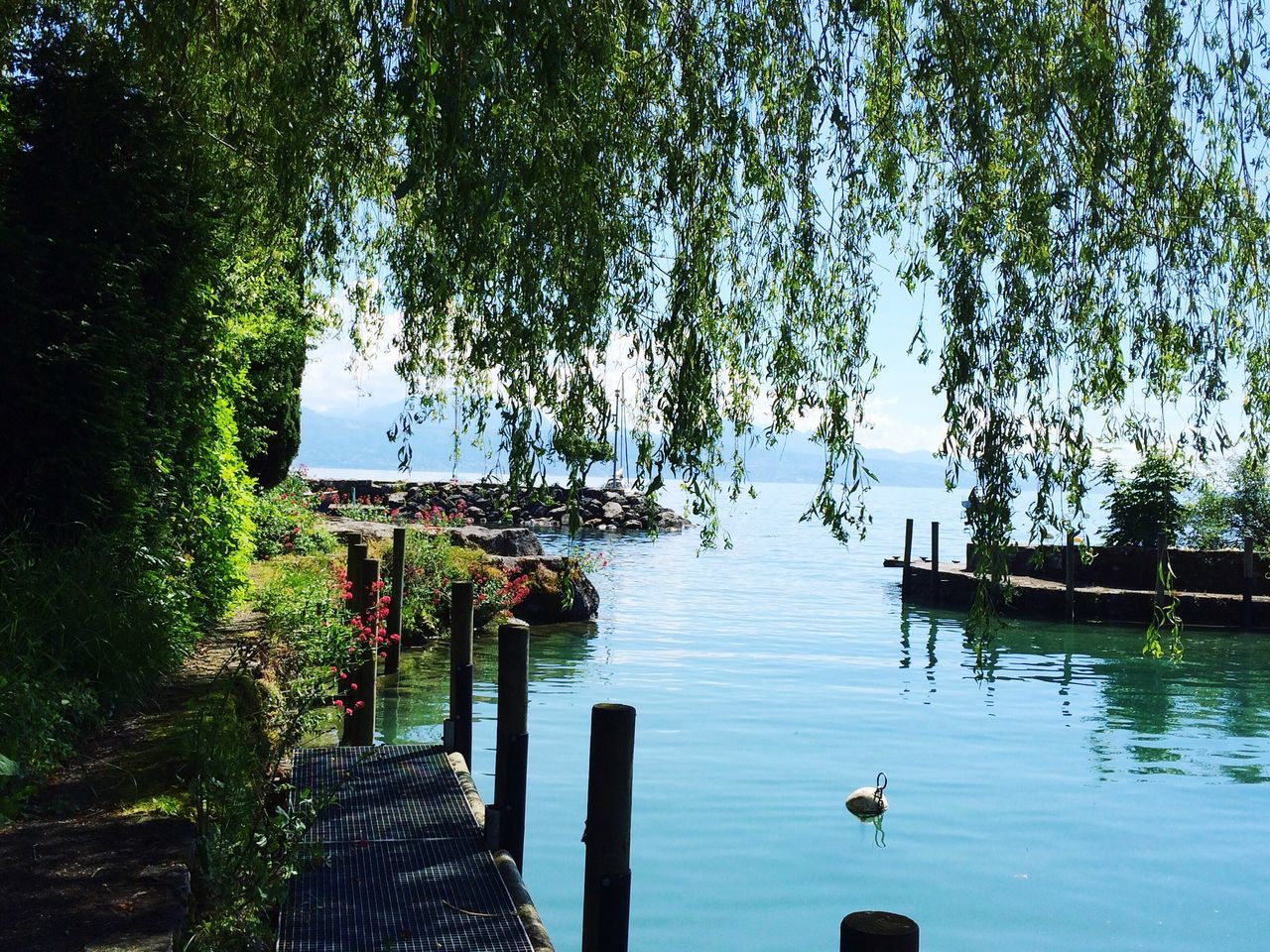 Fine Art Photography A Place To Breathe Tranquil Scene Lake Leman Trees And Water Sky And Trees Blue IPhone SE