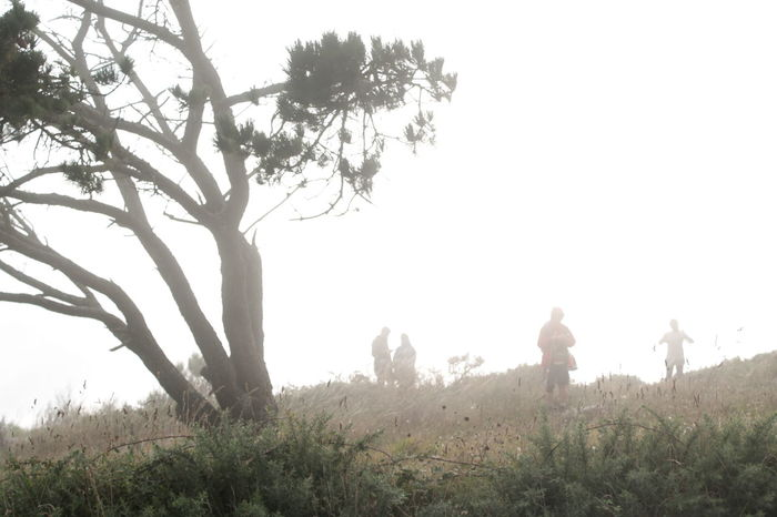 Alone Beauty In Nature Day Discovering Nature Exploration Finistere Fog Gallery Landscape Magic Nature Nature Non-urban Scene Outdoors Spa Tourism Tree Wild Nature