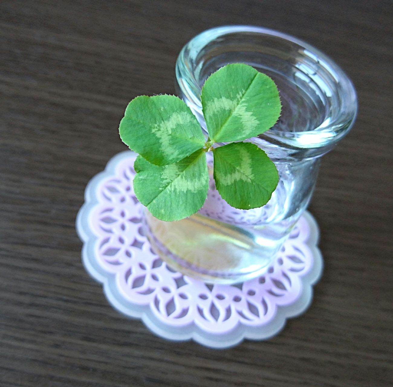 From my nephew:) Clover Leaf Close-up Day Photooftheday Enjoying Life Four Leaf Clover Happy Lucky Green Leaf Beautiful Day