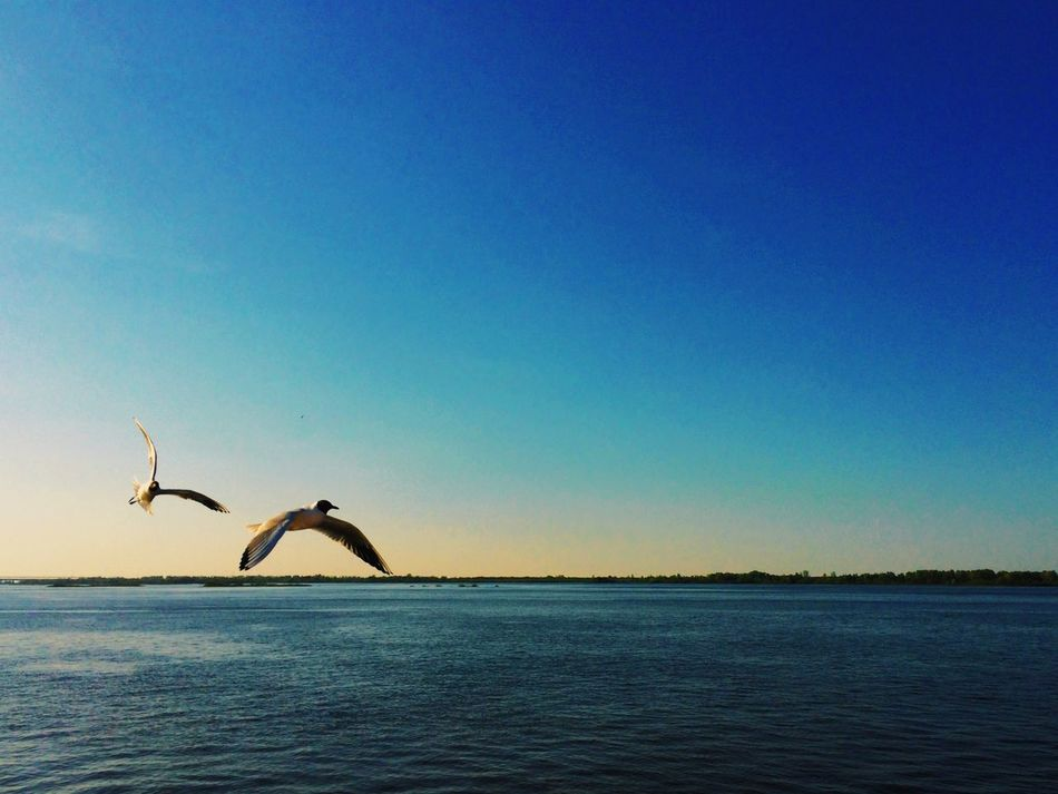 My Country In A Photo Fly Away River Volga River Bird Photography Nature EyeEm Nature Lover Sky Nature_collection Water_collection