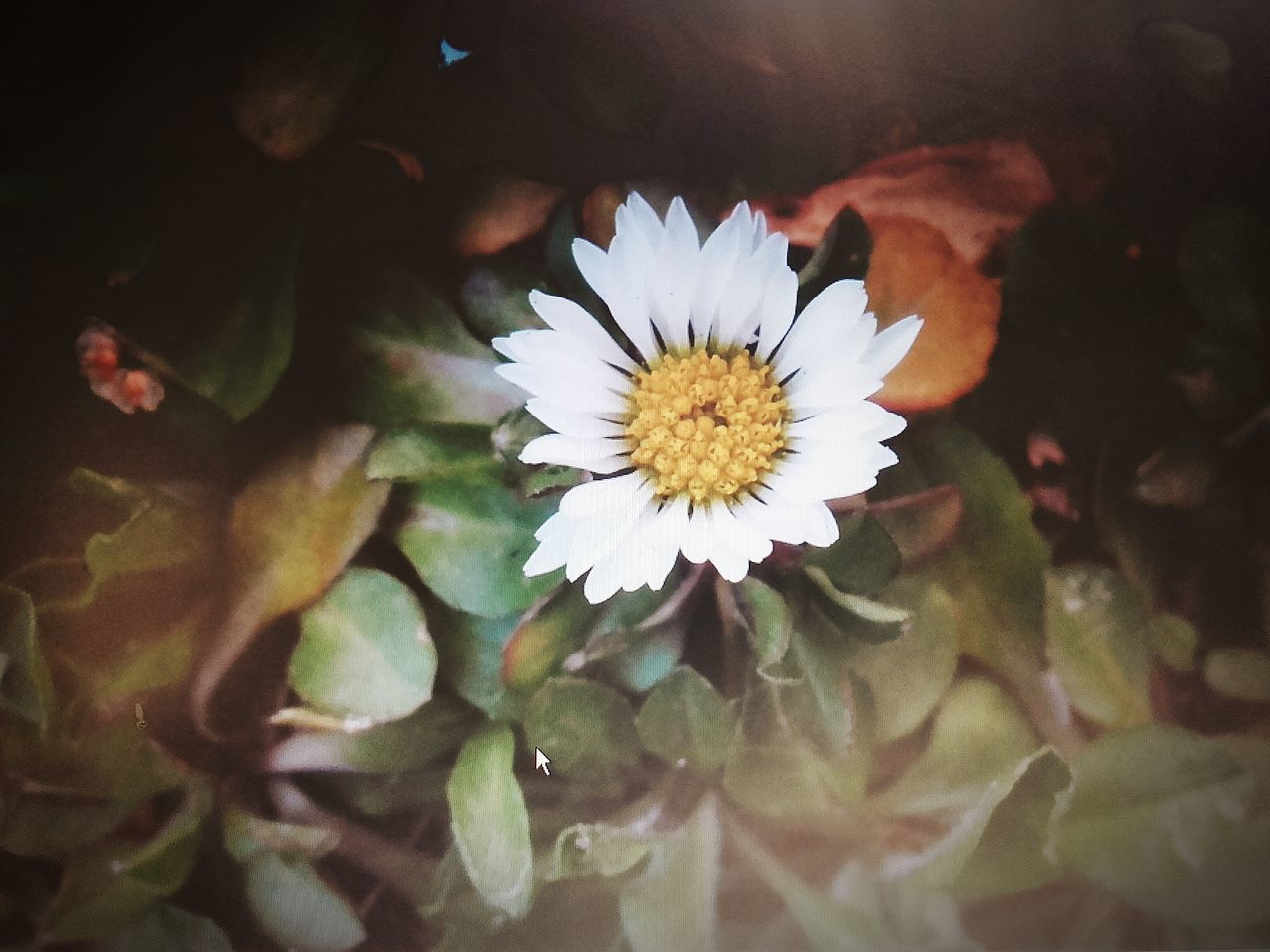 flower, petal, beauty in nature, fragility, nature, freshness, flower head, growth, leaf, close-up, plant, blooming, yellow, no people, outdoors, day