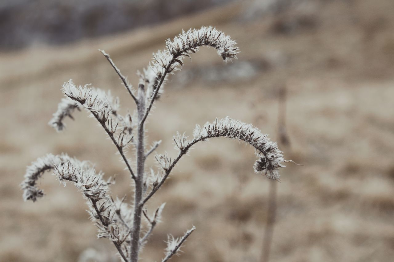 Focus On Foreground Nature Growth Plant Dried Plant Beauty In Nature Close-up Fragility Branch Ice Cold Winter Autumn Cold Temperature Grassland Steppe Grass Dry Dry Leaves Leaf Blossom Blossoms  Ripe Flower Flowers