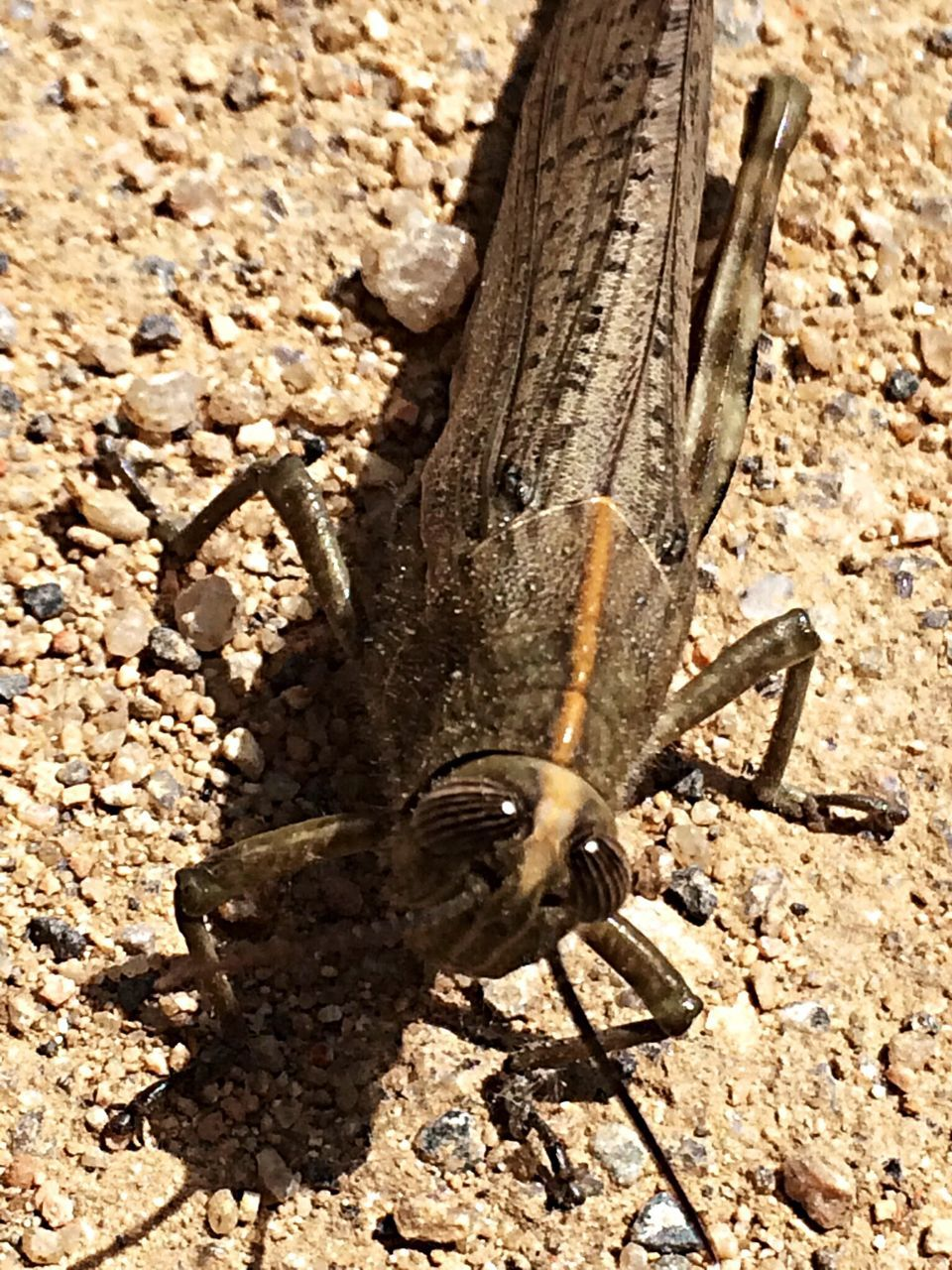 Close-Up Of Insect On Ground