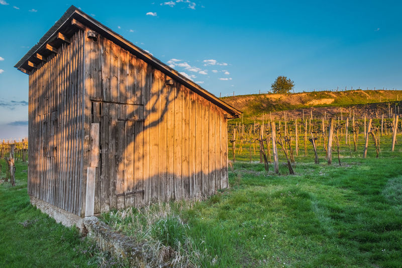 Abandoned Architecture Barn Barn Building Exterior Built Structure Clear Sky Day Field Grass Nature No People Outdoors Rural Scene Sky Tree Vines Vineyard Wood - Material