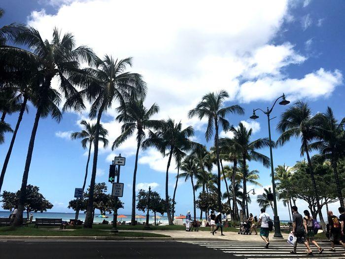Cloud - Sky Palm Tree Tree Sky Vacations Nature Tourism Honolulu, Hawaii Waikiki Beach Waikiki Outdoors