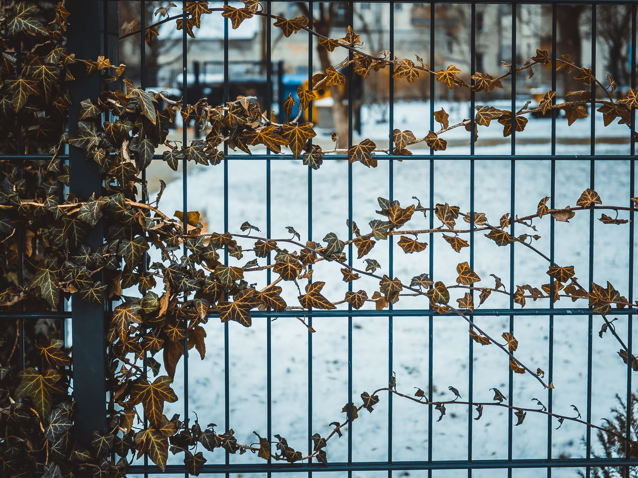 Berlinstagram Cityscape Close-up Day Explore Fence Leafes No People Outdoors Snowfall Urbanwinter Vines Weather Winter Winter In Berlin Winter In The City Winterwonderland