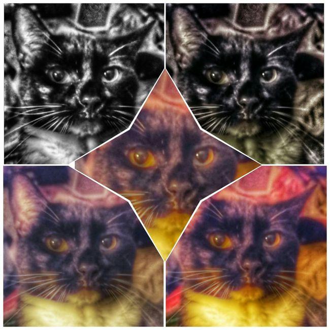 Missie my girl Enjoying Life Pet Portrait Cat Photography Pet Photography  Cat My Pretty Girl cat momma's girl Cat's Life