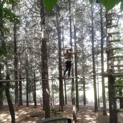 ?????????☀ Parco Avventura Delle Madonie percorso altezza paura divertimento imbragatura lacci instafun instahappy 10 alberi altialti verde natura floraefauna aria fresca followme