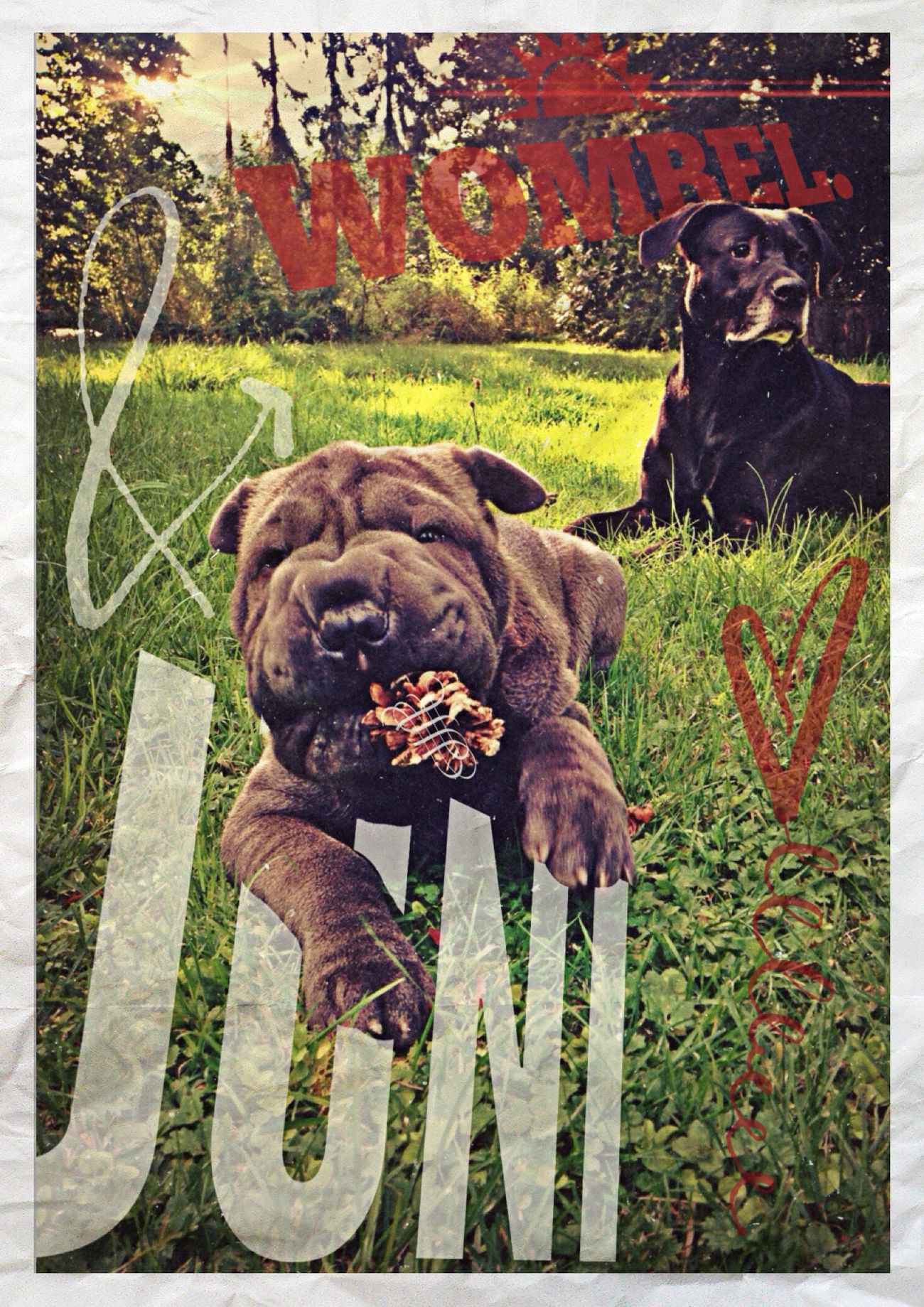 girls. // juni & wombel. grafixed. Check This Out I Love My Dog s Getting Inspired Enjoying Life Hanging Out Animals Portrait