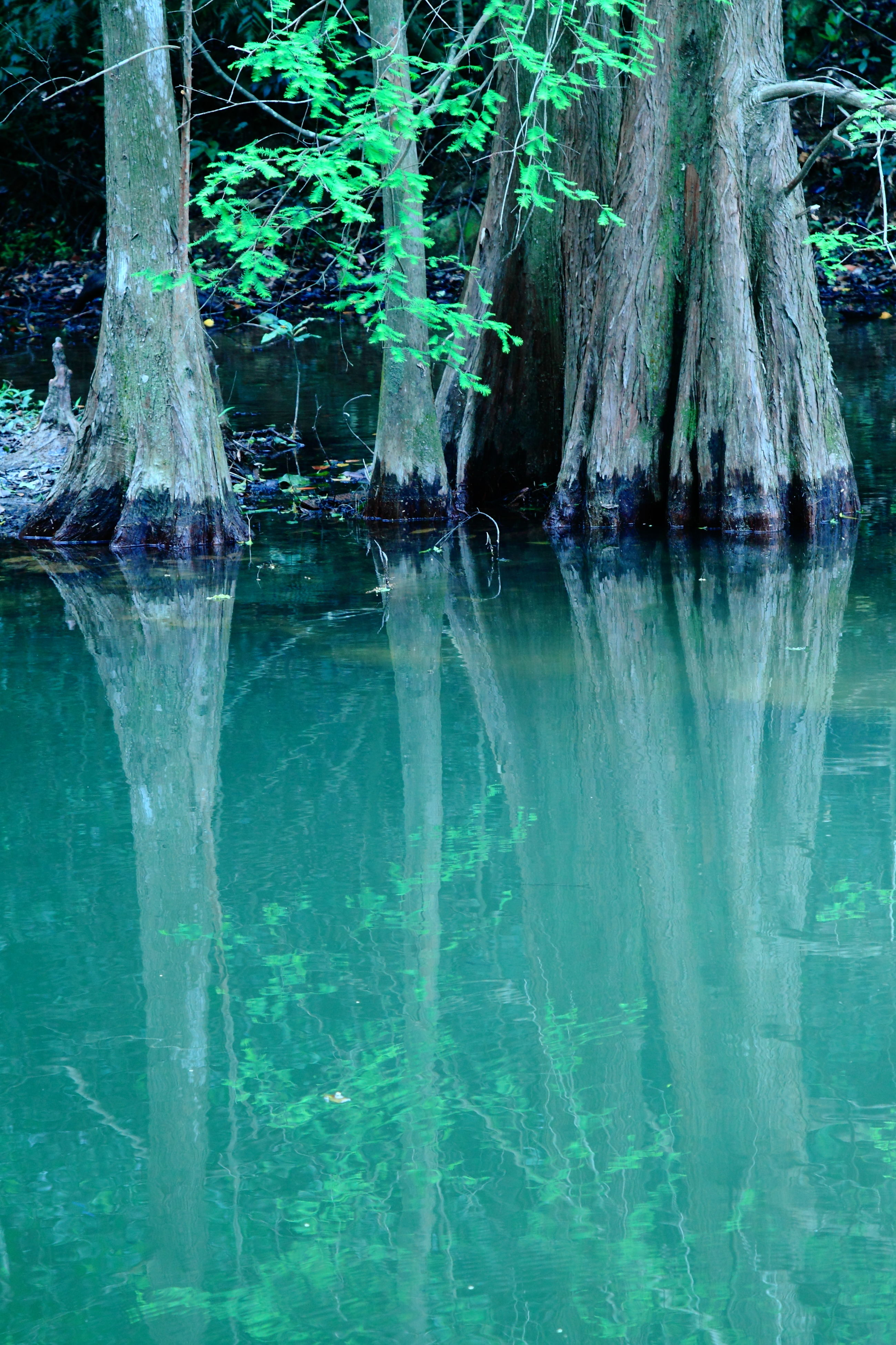 tree, water, swimming pool, tree trunk, nature, green color, beauty in nature, outdoors, day, no people, scenics, refraction, sky