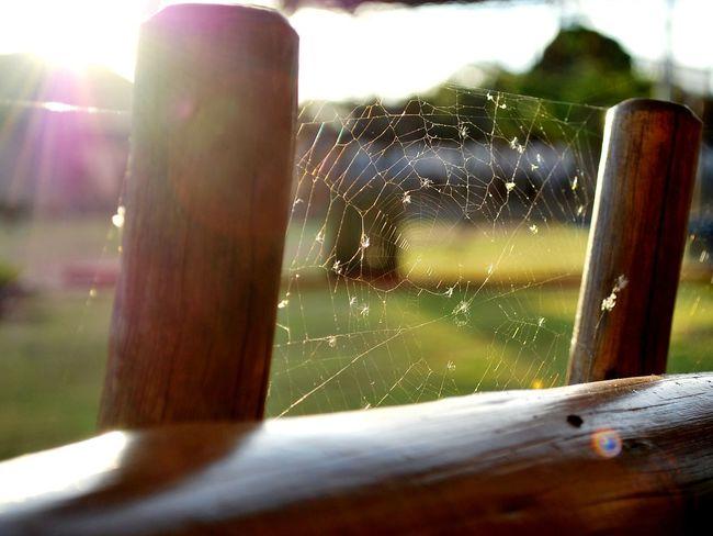 Spiderweb Spider Web Spiderwebs Against The Light Against The Sun Flare Flares Lensflare Lensflares Transparent Focus On Foreground Nature Popular EyeEm Best Pics EyeEm Best Shots EyeEm Gallery Outdoors Sunset Wood Day Nature Photography Sunlight Light Nature_collection Sunshine