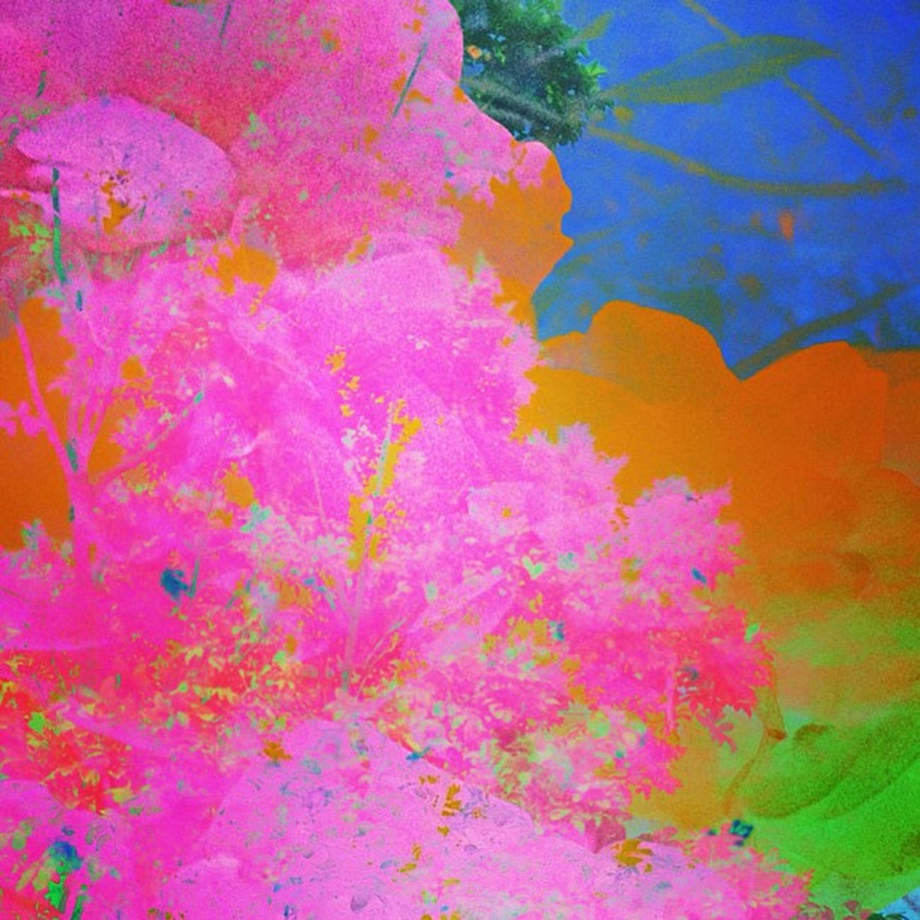 The Harvesting of Fairy Dust Ig_captures Happycolortrip Abstracto Coloronroids All_shots Dhexpose StayABSTRACT Ace_ Abstractart Deadlydivas Gang_family Ig_one Editjunky Icatching Mobileartistry Femme_elite Instauno Weareinheaven Igsg You_nique_edits Bd Mi55flowerz Abstracters_anonymous Edit_fever Abstract_buff Abstractobsession Instaabstract