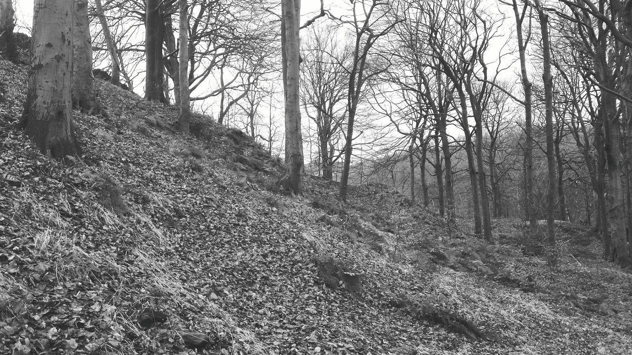 landscape black white monochrome woodland magical gothic wood a walk