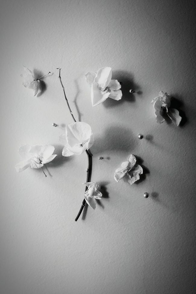 Monochrome Photography Flower Indoors  Vignette Blossom Freshness Petal Light Black And White Photo Flowers Orchid Orchid Blossoms Pale Black&white Shadow Indoors  Flower Auto Post Production Filter Close-up Vignette Selective Focus Fragility Beauty Blossom