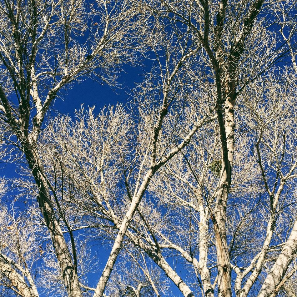 Big Morongo Canyon Preserve: Winter Trees No Leaves