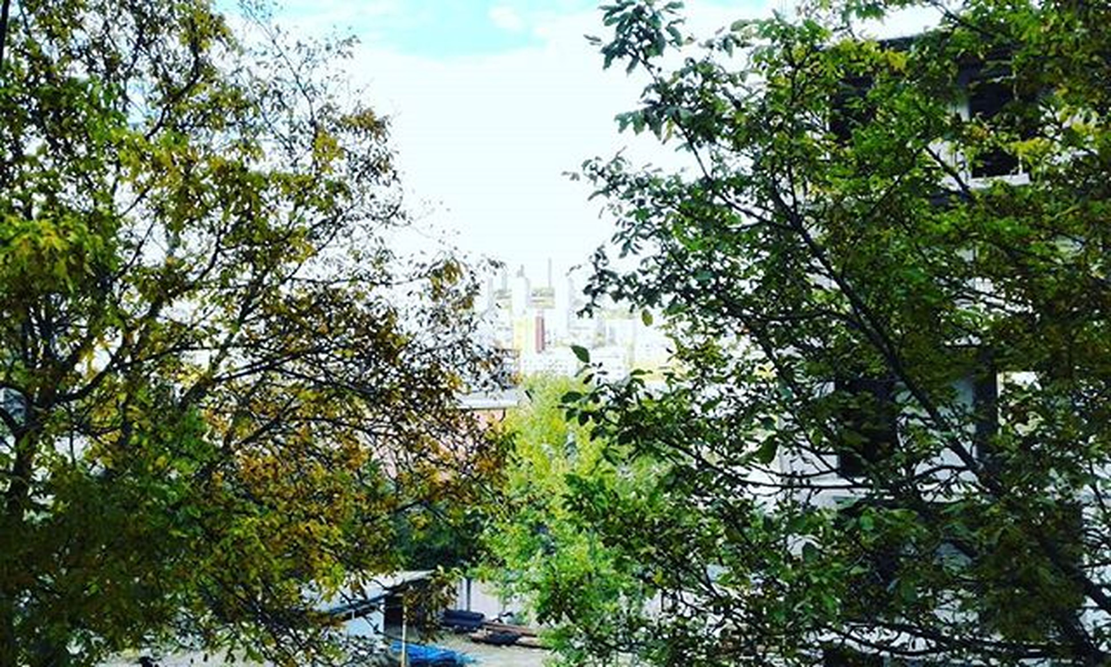 tree, low angle view, growth, building exterior, built structure, architecture, sky, branch, green color, day, nature, tall - high, outdoors, no people, tree trunk, lush foliage, tower, sunlight, city, tranquility